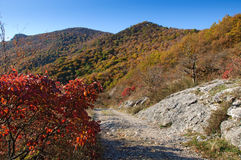 The trail in a beautiful autumn mountains Royalty Free Stock Photo