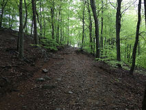 Trail in a beech forest Stock Photos