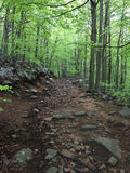 Trail in a beech forest Royalty Free Stock Images