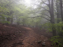 Trail in a beech forest. Stock Images