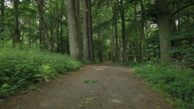 Trail in the beech forest on a summer day. Camera movement along a trail in the beech forest on a summer day. Green plants and leaves on the ground long trail stock video footage