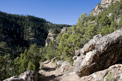 Trail through Big Horn Mountains Royalty Free Stock Photos