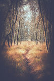 Trail between birches Stock Photo