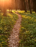 Trail in blossoming green spring forest, nature background Stock Image