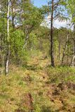 Trail on a bog Stock Images