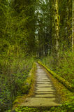 Trail bridge in the Hoh Rain Forest Olympic National Park Washington state Stock Photos