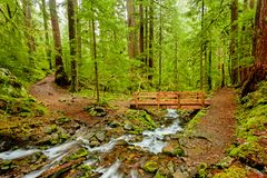 The trail and bridge to Sol Duc Falls, Olympic National Park, Wa royalty free stock image