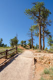 Trail in Bryce Canyon Royalty Free Stock Photos