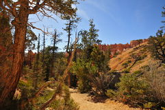 Trail in Bryce Canyon NP Stock Photo