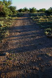 A trail in the bush. Covered in animal tracks stock photos