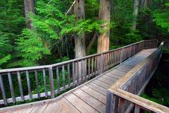 Trail of the Cedars - Glacier NP Stock Photo