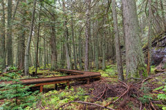 Trail of the Cedars. A raised boardwalk along the trail of the cedars in Glacier National Park, Montana Royalty Free Stock Images