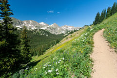 Trail Climbs Through Mountain Wildflowers Royalty Free Stock Photography