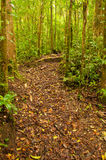 Trail in cloud forest Stock Photos