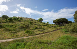 Trail through Coastal Flora. Remote narrow trail through lush, grassy coastal dunes and trees under a blue sky with clouds at Rottnest Island in Western Royalty Free Stock Images