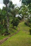 Trail Through Coffee Plantation royalty free stock photos