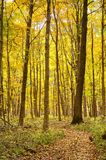 Autumn Trail with yellow leaves. Stock Photo