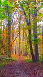 Trail of colors. Colorful fall leaves create a colorful trail Stock Photography