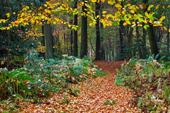 Trail through a colourful forest in autumn Stock Image
