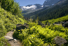 The Trail Continues. Asulkan Valley Trail, Rogers Pass, British Columbia Canada. National Park British Columbia Royalty Free Stock Photo