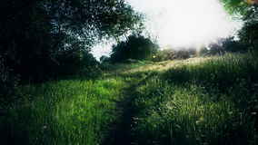 Trail in the countryside. A shot of a trail in the countryside on a sunny afternoon stock video