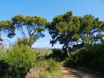 A trail at the countyryside of the island Lastovo Stock Photography