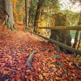 Trail covered fallen autumn leaves is lined with trees displaying colorful fall Royalty Free Stock Photo