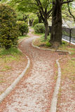 The trail covered with pink flower petals of sakura. Stock Photos