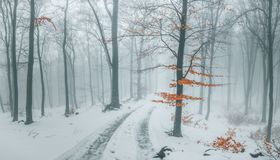 Trail covered in snow in romantic foggy forest. Trees with red leaves. Winter cold day stock image