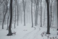 Trail covered in snow in romantic foggy forest. Trees with red leaves. Winter cold day stock photo