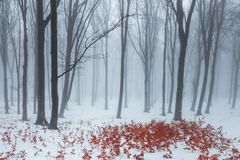 Trail covered in snow in romantic foggy forest. Trees with red leaves. Winter cold day royalty free stock photo