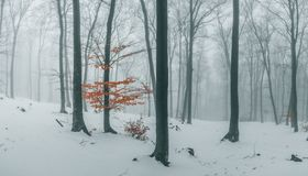 Trail covered in snow in romantic foggy forest. Trees with red leaves. Winter cold day stock photography