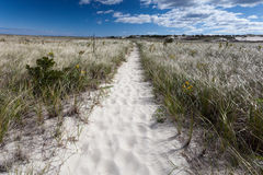 Trail on Crane beach in Massachusetts Royalty Free Stock Photography