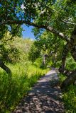 A trail through the Crooked Bush of Saskatchewan. On a summer day stock photography