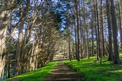 Trail in a Cypress trees forest, Fitzgerald Marine Reserve, Moss Beach, California royalty free stock photos