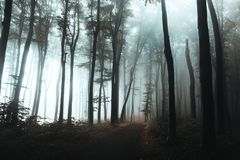 Trail in dark foggy forest. Hard light coming from left side. Interesting tree at the end of the path royalty free stock image