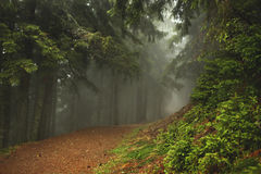 Trail in a dark pine forest on the slopes of the mountain. Carpathians, Europe. Beauty world. Stock Photos