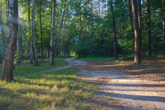 Trail in the deciduous forest illuminated by the sun Royalty Free Stock Photos
