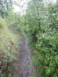 Trail on a deep wet forest. A trail on a deep wet forest Stock Photos