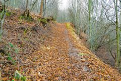 Trail in a dense forest in autumn.  Royalty Free Stock Images