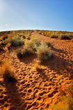 Trail in desert Stock Images