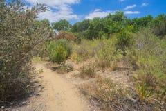 Trail through Desert Brush Stock Images