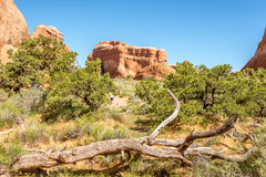 Trail in Devils Garden Stock Photo