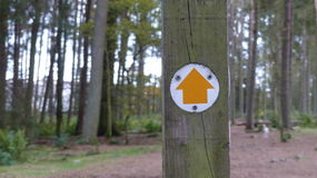 Trail Direction straight ahead. Orange arrow Stock Images