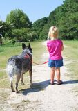 Trail dog. Little girl walking a dog Royalty Free Stock Image