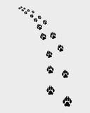 Trail of dog Stock Image