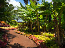 Trail at the Dole Plantation Stock Photo
