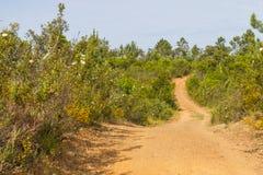 Trail with Esteva flowers and pines in Vale Seco, Santiago do Ca. Cem, Alentejo, Portugal Stock Photos