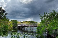Trail in the Everglades Royalty Free Stock Images