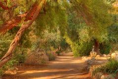trail för 2 djungel Royaltyfri Foto